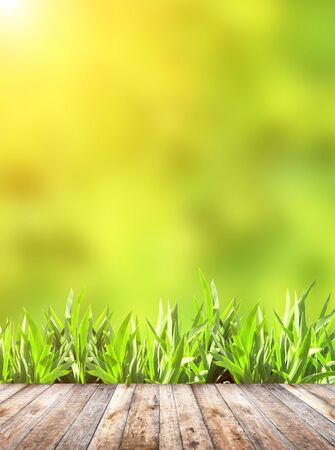 green plants: Summer grass and old wooden planks on green background