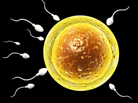 animal sex: Spermatozoons, floating to ovule - 3d render