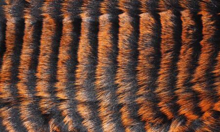 coathanger: Fur is painted orange and black stripes Stock Photo