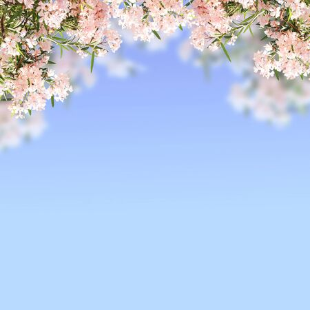 flowering: Spring flowers of pink color and green leaves on blue sky background