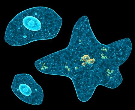 ameba: Diferentes amebas sobre fondo negro. 3d Foto de archivo