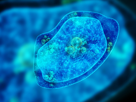 protozoan: Amoeba on blue background. 3d render Stock Photo