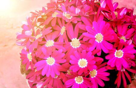 Beautiful purple flowers on sunny background Stock Photo
