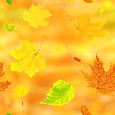 Seamless background with flying autumn leaves of a birch, maple and barberry. On yellow background