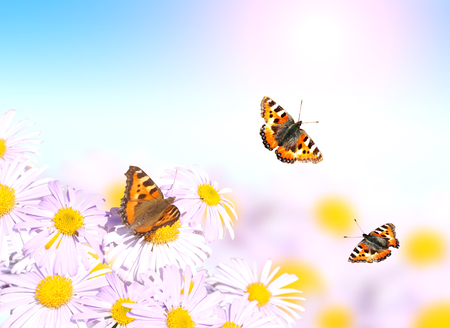 butterflies flying: Butterflies flying over flowers on sunny background of blue color
