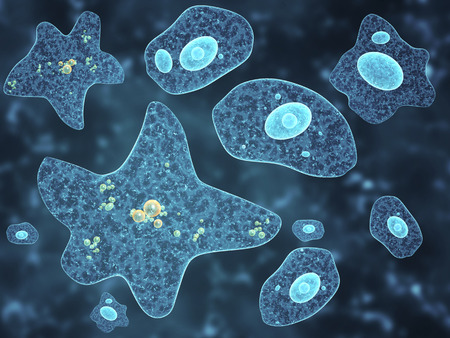protozoan: Different amoebas on abstract background. 3d render Stock Photo