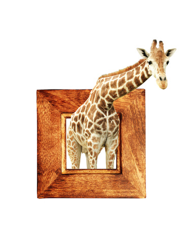 Giraffe in wooden frame with 3d effect. Isolated on white background