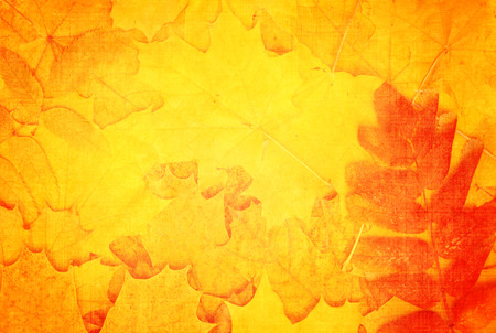 hojas antiguas: Grunge fall background with old paper texture and autumn leaves
