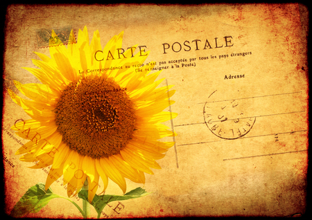 soiled: Grunge background with texture of the old, soiled paper, sunflower and vintage post card