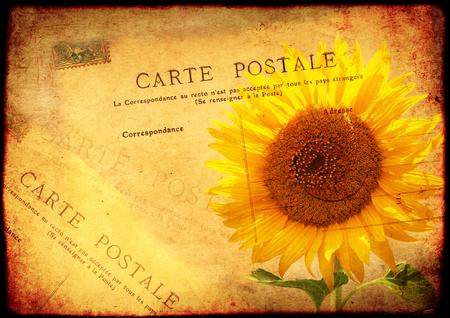 post card: Grunge background with texture of the old, soiled paper, sunflower and vintage post card