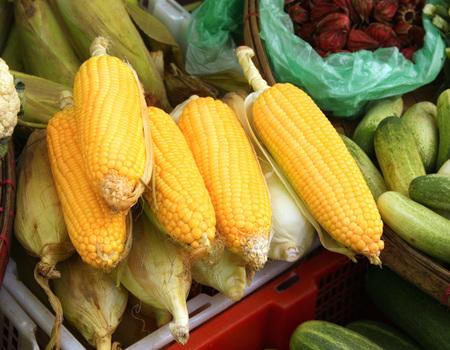 yellow corn: Fresh yellow corn on the morning chinese market in Yangon, Myanmar Stock Photo