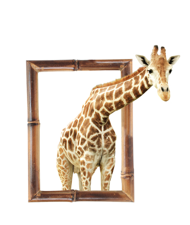 single animal: Giraffe in bamboo frame with 3d effect. Isolated on white background Stock Photo