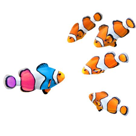コンセプト - ご自身で一意であること。標準カクレクマノミやカラフルな魚の群れ。白い背景に分離