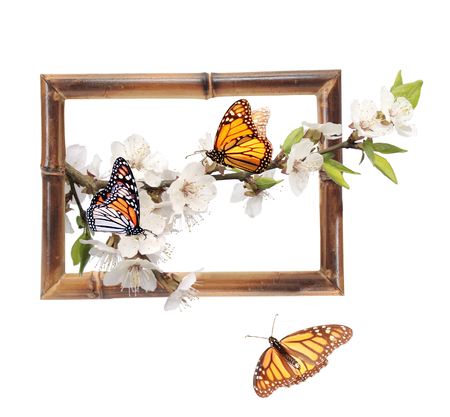 Flowers of cherry and monarch butterflies (Danaus plexippus, Nymphalidae) in bamboo frame with 3d effect. Isolated on white background