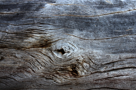 Texture of old wooden board of grey color