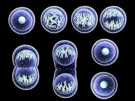Mitosis process, division of cell. Isolated on black background. 3d render Banque d'images