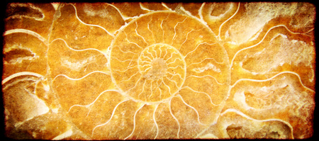 Grunge background with paper texture and ammonite shell Stock Photo