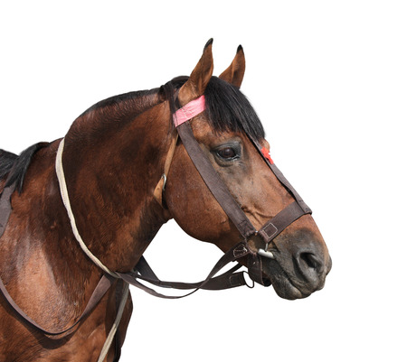Portrait of a brown horse. Isolated on white background Stock Photo - 94426619