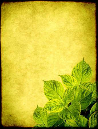 Grunge background with paper texture of green color and leaves of hydrangea Stock Photo