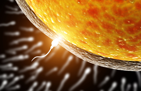 Spermatozoon, floating to ovule. The moment of fertilization of an egg with a sperm. On black background. 3d render Stock Photo - 99555081