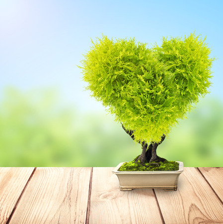 Eco concept. Heart Shaped tree in flower pot on old wooden deck. On blurred sunny background