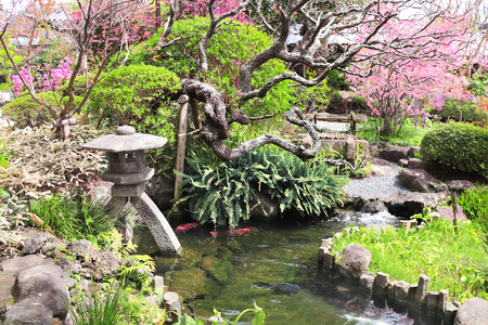 Stone lantern and pond in traditional japanese ornamental garden, Hasedera temple, Kamakura, Japan
