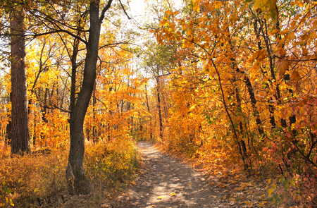 Beautiful landscape with road in autumn forest