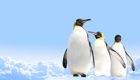 Horizontal banner with three emperor penguins on blue sky background. Copy space for text. Mock up template