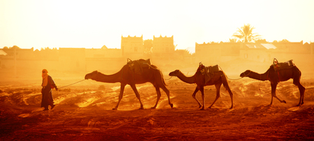 Horizontal banner with caravan of camels in Sahara desert, Morocco. Driver-berber with three camels dromedary on sunrise sky background and traditional moroccan houses Stock Photo