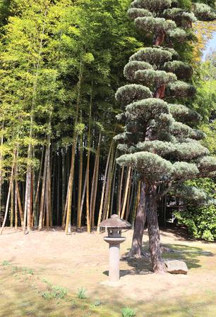 Decorative stone lantern, bamboo and pine in Koishikawa Korakuen garden, Okayama, Japan Stock Photo