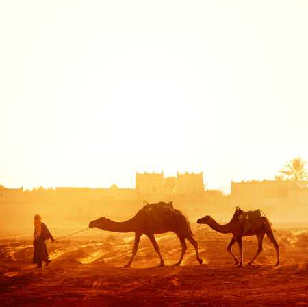 Horizontal banner with caravan of camels in Sahara desert, Morocco. Driver-berber with two camels dromedary on sunrise sky background and traditional moroccan houses Stock Photo