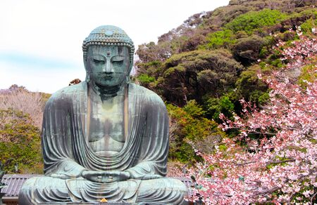 The Great Buddha and flowers of sakura, Kotoku-in temple, Japan