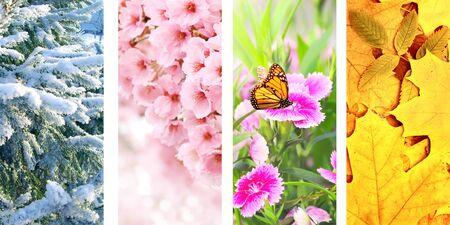 Vier seizoenen van het jaar. Set verticale natuurbanners met winter-, lente-, zomer- en herfsttaferelen Stockfoto