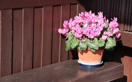 Flowering begonia in rustic clay pot on wooden bench. Copy space for text