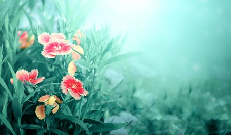 Magical scene with carnation flowers on sunny beautiful nature spring background. Photo toned in light green color. Copy space for text 写真素材