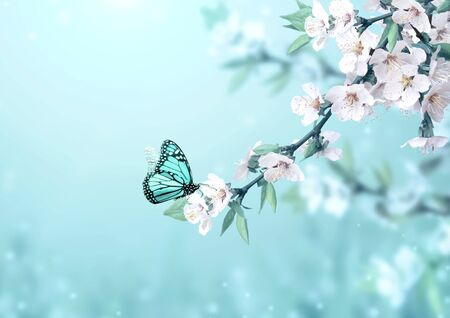Magical scene with cherry flowers, butterfly and magic sparks. Beautiful nature spring background. Photo toned in light blue color. Copy space for text