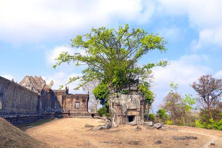 Roots of giant banyan tree on ruins in Preah Vihear Temple complex (Prasat Phra Wihan), Cambodia.