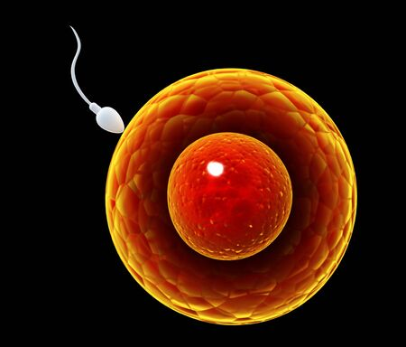 Spermatozoon, floating to ovule. The moment of fertilization of an egg with a sperm. Isolated on black background. 3d render