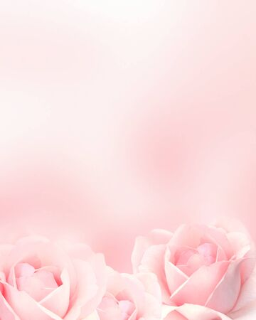 Blurred vertical background with three roses of pink color. Copy space for your text. Mock up template. Can be used for wallpaper, wedding card, web page banner Stockfoto