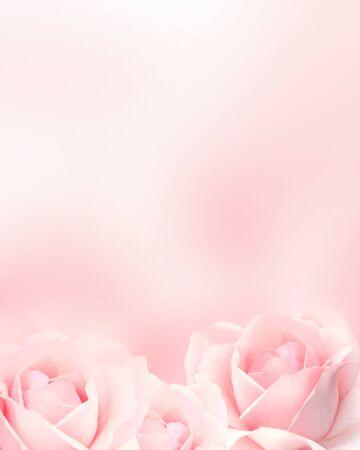 Arrière-plan vertical flou avec trois roses de couleur rose. Copiez l'espace pour votre texte. Modèle de maquette. Peut être utilisé pour le papier peint, la carte de mariage, la bannière de page Web Banque d'images