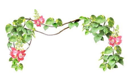 Frame with liana branches, flower and tropical leaves. Exotical border with plants of jungle and copy space for text. Isolated on white background. Mock up template