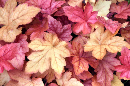 Fall season. Horizontal nature background with autumn leaves of purple and yellow color