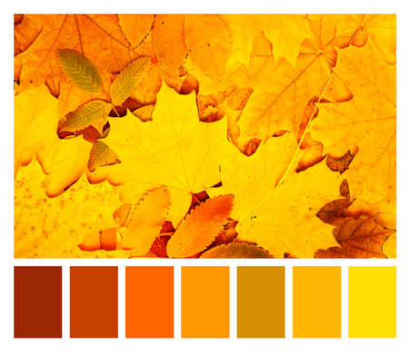 Color matching palette with complimentary colour swatches. Autumn maple and rowan leaves of orange, green, red and yellow colors. Fall season color matching palette