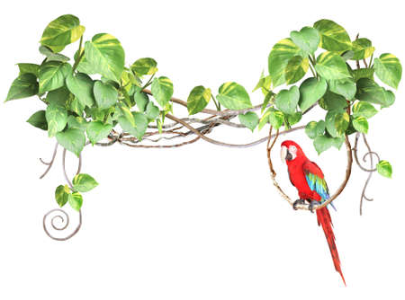 Ara parrot sits on a liane among tropical leaves. Frame with liana branches and Scarlet Macaw. Exotical border with plants of jungle and Ara macao. Copy space for text. Isolated on white background
