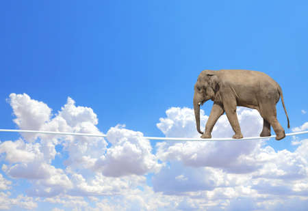 Managing risk concept. Elephant walking on a rope on the blue sky background. Cute elephant on tightrope above the clouds Banque d'images