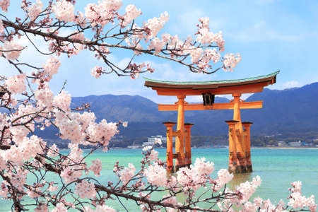 Floating Torii gate (O-Torii) and branch of the blossoming sakura  white flowers, Itsukushima Shrine, sacred Miyajima island, Hiroshima, Japan.    site