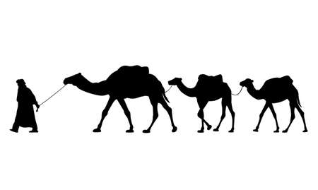 Silhouette of caravan of camels. Driver-berber with three camels dromedary. Vector illustration EPS8 Vettoriali