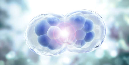 Cell Division. Stages of Mitosis. Cellular Therapy. Horizontal banner with Process Division Of Cell on blurred background of blue and gray colors. Copy space for text. 3d render