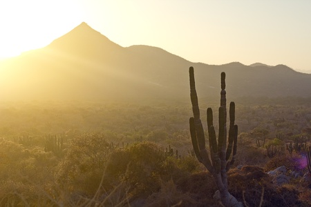 desert vegetation: Los Cabos, Mexico  Landscape during the sunset with cactus and beautiful mountains  Stock Photo