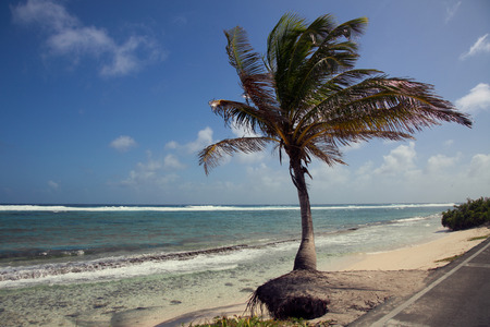 Palm tree and the beach